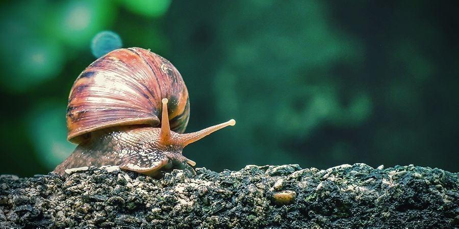 Escargots Et Limaces