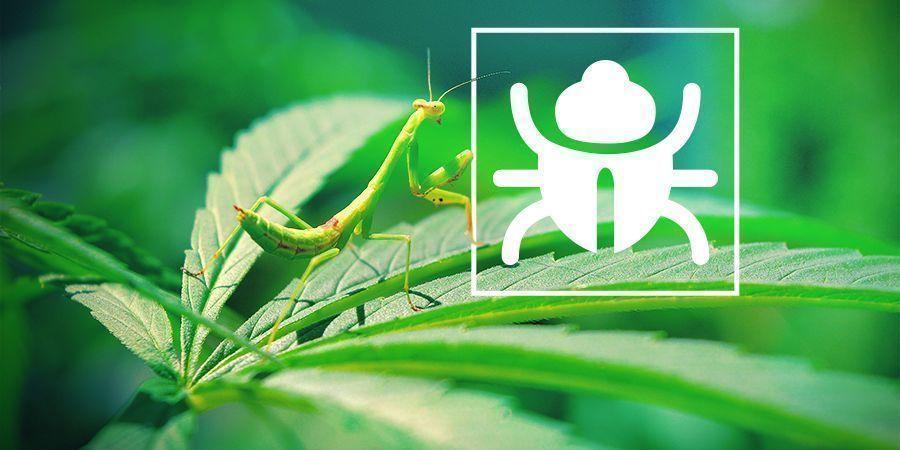 Insectes et Bestioles Pénibles