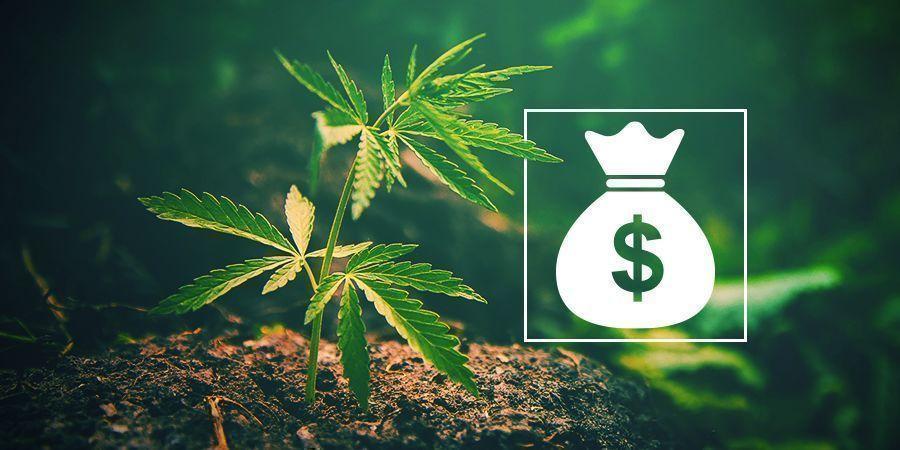 Pourquoi Cultiver Votre Propre Cannabis ?
