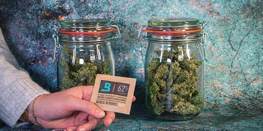 Conserver Son Cannabis Après La Récolte