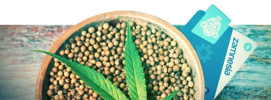 Informations Concernant Les Graines De Cannabis