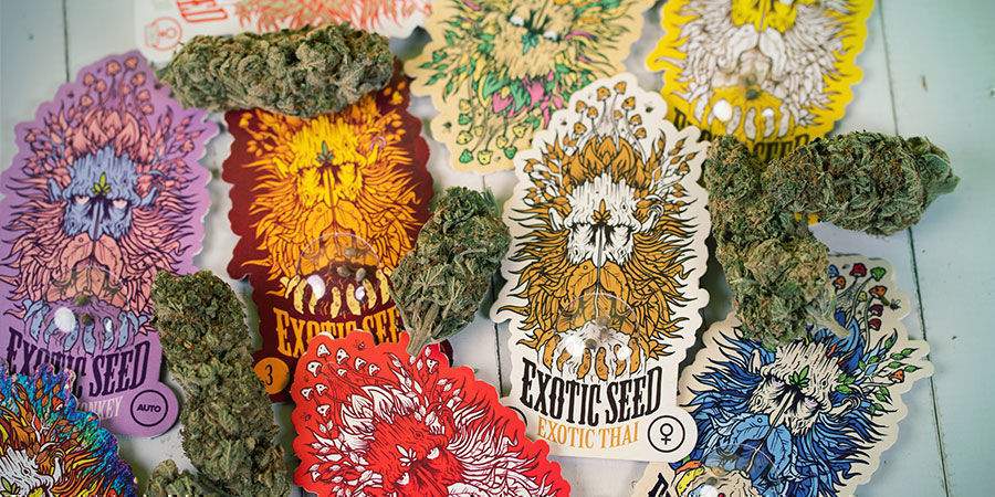 Emballage Graines Exotic Seed