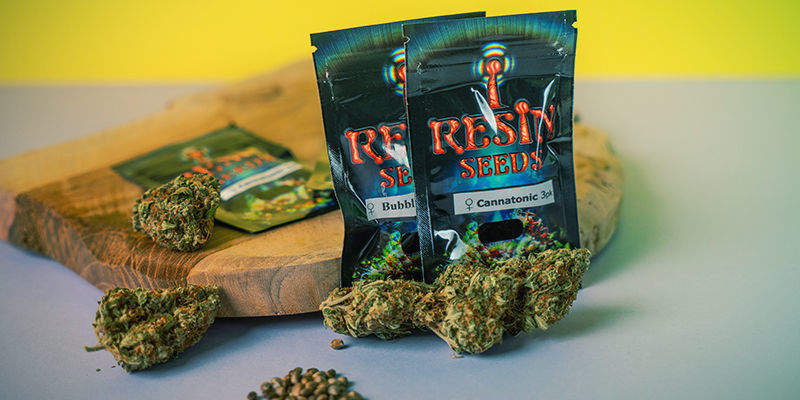 Resin Seeds : Graines Cannabis Féminisée