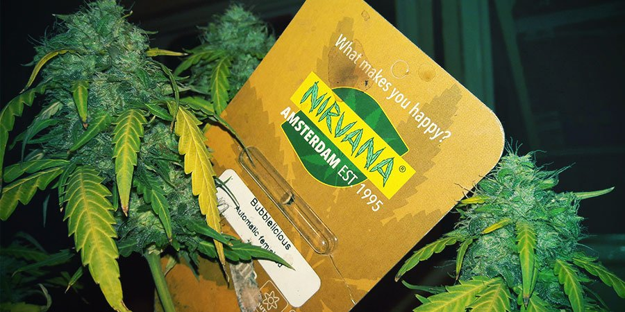 Emballages De Nirvana Seeds