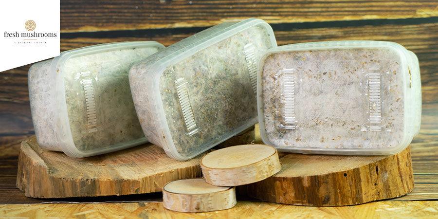 Kits De Culture De Champignons Magiques Fresh Mushrooms