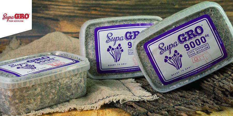 Kits De Culture De Champignons Magiques Supa Gro