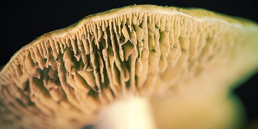 Faire Une Empreinte De Spores Chez Soi