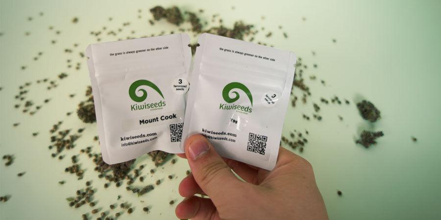 Comment Sont Emballées Les Graines De Cannabis De Kiwi ?