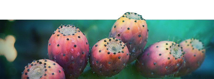 Le Guide Ultime Du Cactus à Mescaline