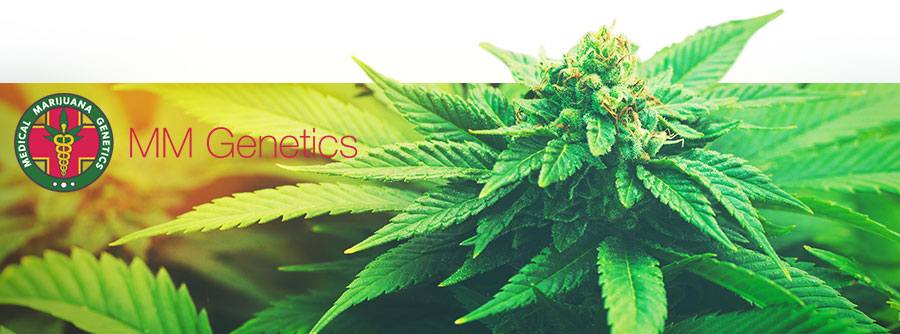 Information de Medical Marijuana Genetics