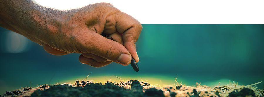 Smart Seeds- Cultivez Chez Vous Des Aphrodisiaques Et Des Psychédéliques.