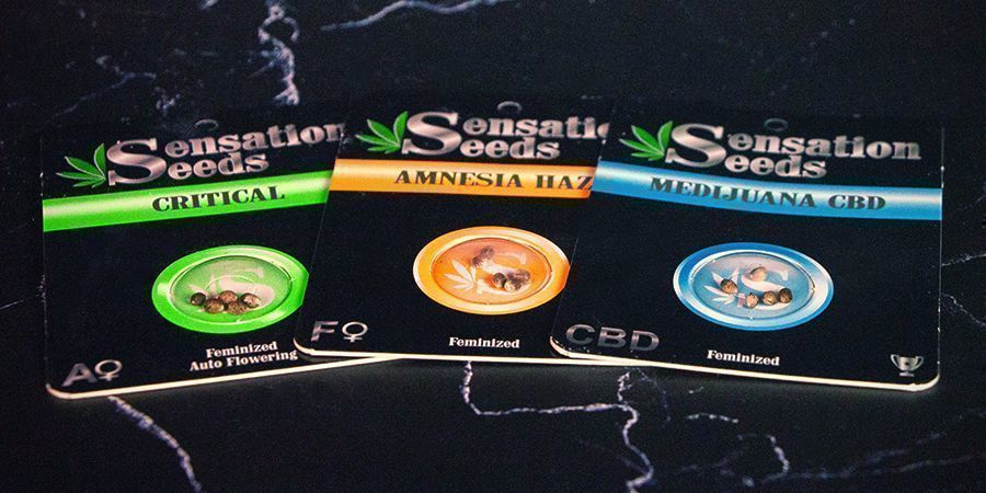 Emballage de Sensation Seeds