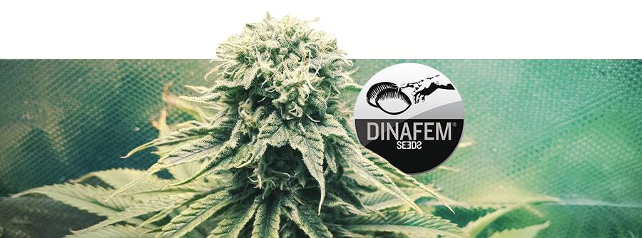 Informations Sur Dinafem