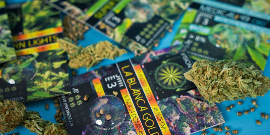 Les Graines De Cannabis Les Plus Populaires De Vision Seeds