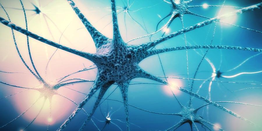 Étape 4 : Nourrissez le système nerveux