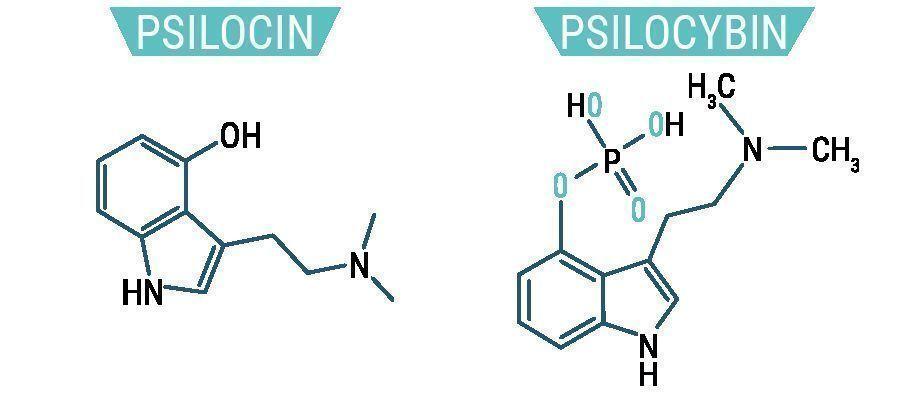 Psilocybine et Psilocine