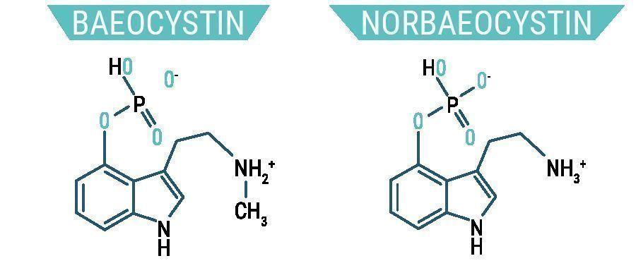 Baéocystine et Norbaéocystine