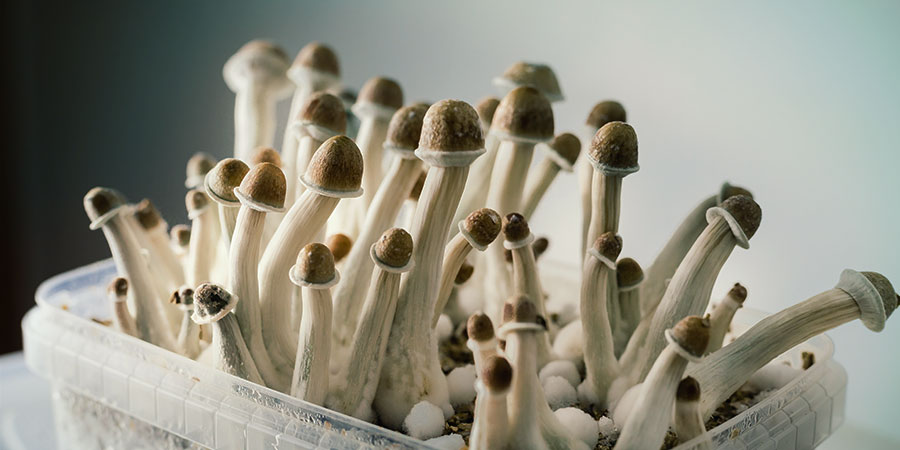 Supa Gro champignons magique