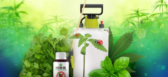 Entretien Des Plantes Au Naturel