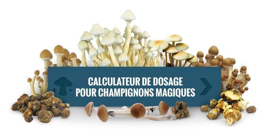 Utilisez Notre Calculateur De Dosage Pour Champignons Magiques