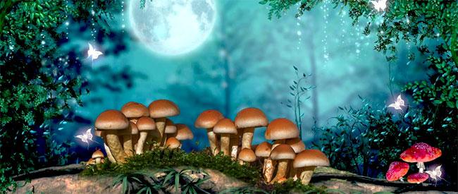 Champignons magiques dans une forêt