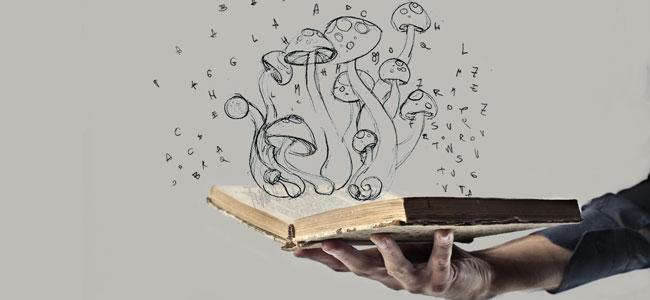Origine du champignon magique