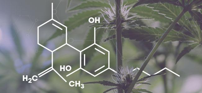 CBD Molécule
