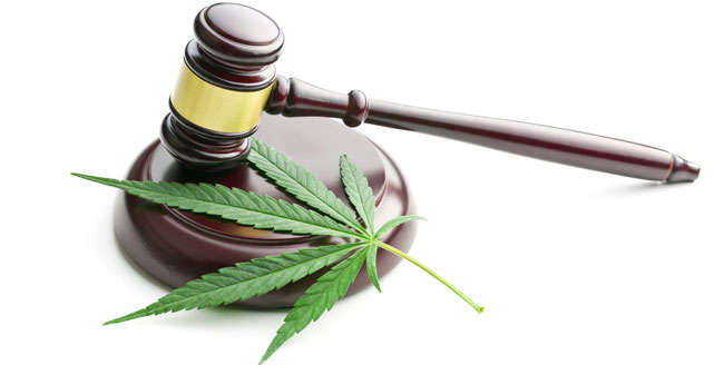 Légalité du cannabis