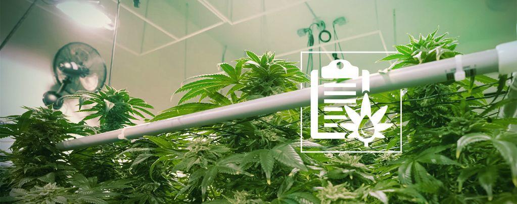 Les Différents Types De Systèmes Hydroponiques Pour La Culture De Cannabis