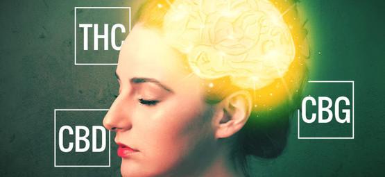 CBD, THC & CBG - Exploration Des Cannabinoïdes