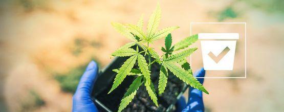 Choisir Le Bon Pot Pour Vos Plants De Cannabis