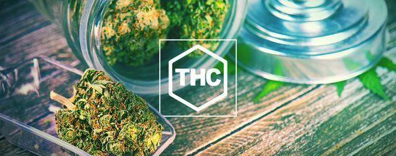 Tout Ce Qu'il Faut Savoir Sur Le THC