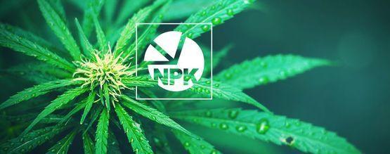 NPK : Quel Est Le Meilleur Ratio Pour Cultiver Du Cannabis