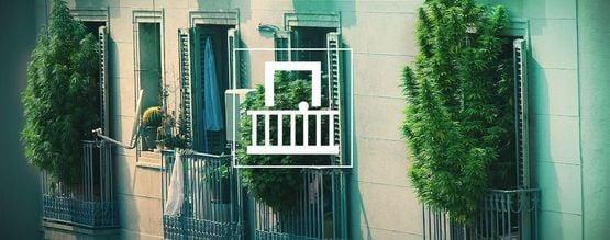 Pourquoi Devriez-Vous Cultiver Votre Ganja Sur Votre Balcon Ou Terrasse ?