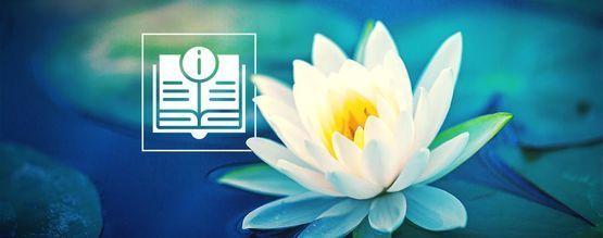Tout Ce Que Vous Devez Savoir Sur Le Lotus Blanc