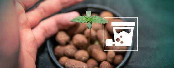 Comment Cultiver D'Énormes Récoltes De Cannabis Avec L'Hydroponie DWC