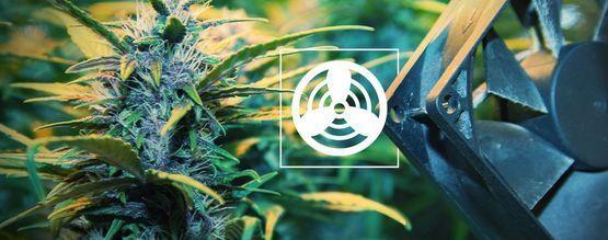 Ventilation De L'Espace De Culture Du Cannabis