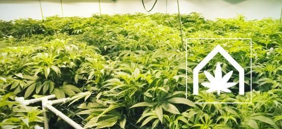 Comment Créer Et Maintenir L'Espace De Culture De Cannabis Ultime