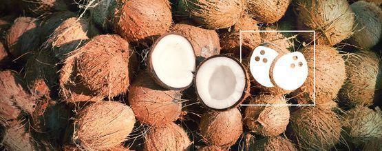 Tout Ce Que Vous Devez Savoir Sur La Culture Du Cannabis Dans Le Coco