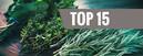 Les Meilleures Plantes Légales À Vaporiser