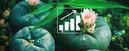Les Graines De Peyote: Comment Faire Pousser Votre Propre Cactus Peyote ?
