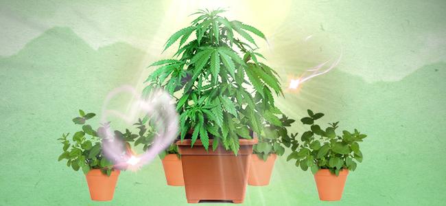 C'est Quoi Les Plantes Compagnes ?