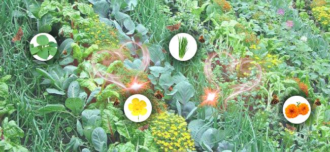 Cannabis polyculture