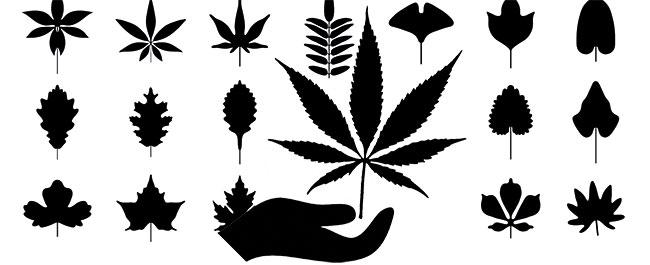 Jardin de la forêt de cannabis