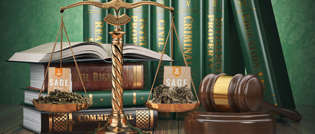 LEGALITE DE LA SALVIA