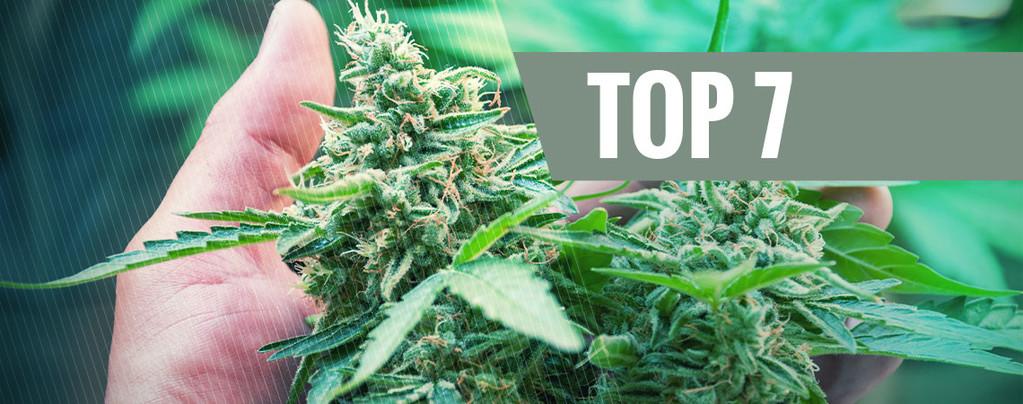 Stress Plants de Cannabis