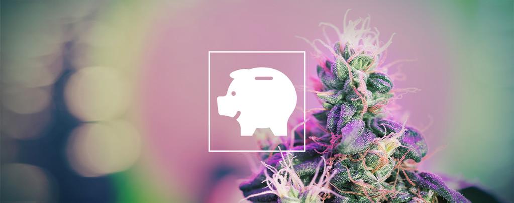 Comment Cultiver Du Cannabis Pour Pas Cher