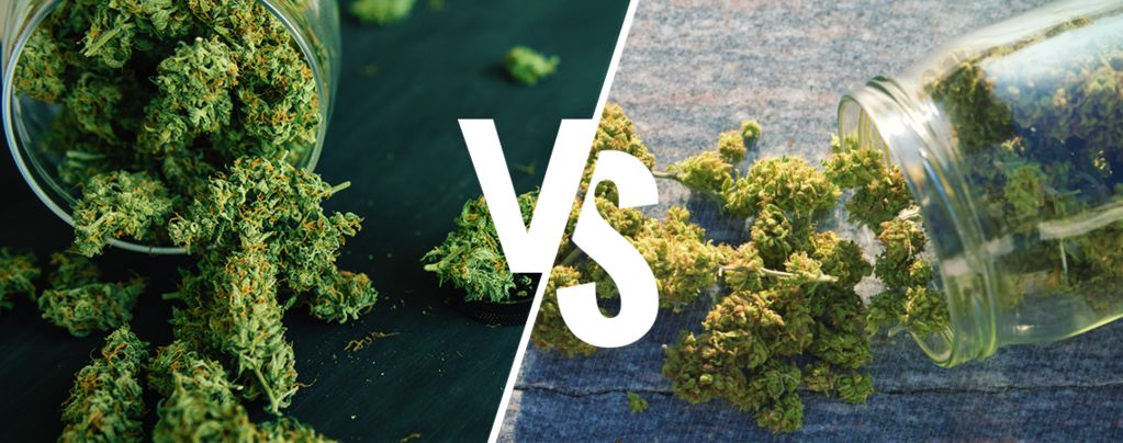 Cannabis en Intérieur ou Extérieur : Quel Est le Meilleur ?