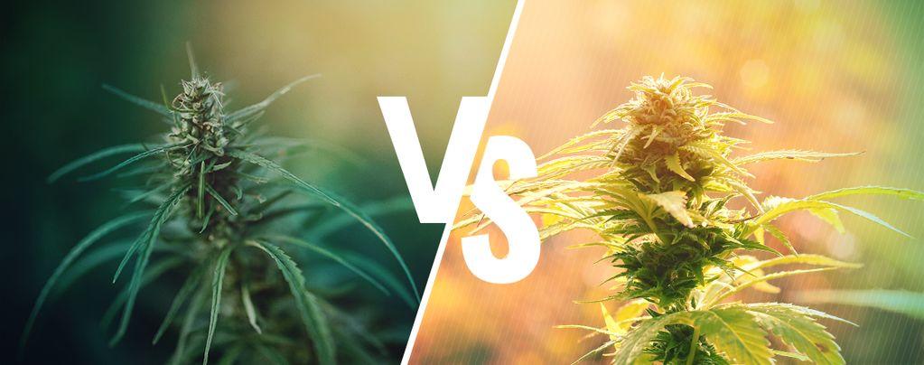 La Différence Entre Chanvre Et Cannabis