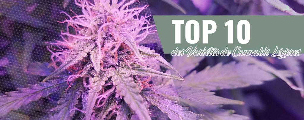 Top 10 Des Variétés De Cannabis Légères